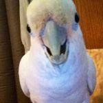 Lola1